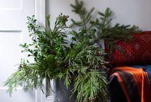 foliage / by Luisa Brimble