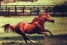Horses / by Becky Semer