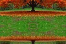 Color / by Backyard Farmer