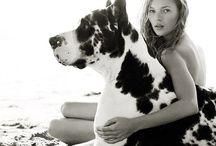Animals / by Madison Suckow