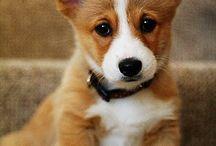 Puppies / by Jocelyn Harty