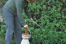 Watch My Garden Grow / by Ashleigh Eades Robertson