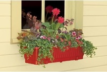 I love window boxes / by Sharon Johnson
