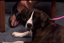 Pet of the Week / by Whsv and The Valley's Fox Newsroom