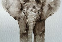 Elephants / by Rachael