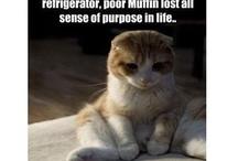 Cats / the best of fur & purrrrr / by Megan B