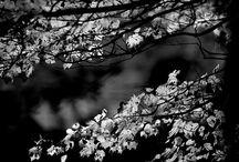Capturing it in Black & White / by Danielle Buttrey-Rakczynski