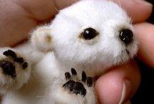 Polar Bear / by Desak Putu Hita Karina Riadika Mastra