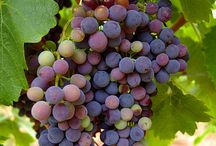 grapes / by Mary Vella