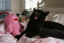 You shiny black ones (Black cats) / My adorable black cats and kittens. / by angie p