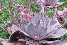 Serious About Succulents / succulents / by Sandra Slattery