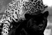 Negro y Blanco / Beautiful Black and White Photography / by Evelina Noni