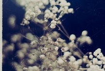 Photography: Macro / by Rebecca Martindale