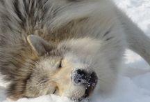 Animal pics.....too cute / by Teresa Kenyon