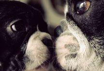 Dogs / by Teresa Gimbert