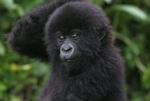 Gorilla / by Shuhei