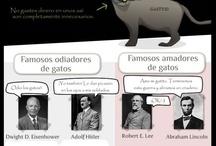 GATOS / by Thelma de Rodríguez