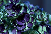Color | Teal & Purple / by Leisa Watkins