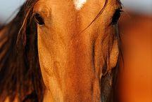 Horses / by Peggy Singleton-Parise