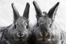 Bunnies / by Allyson Lanzi
