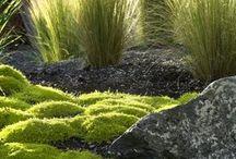 Plants / by Nicholas Morton