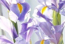 Pics of Flowers / by Carol Kurpjuweit