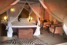 campaign/safari furnishings / by Camden