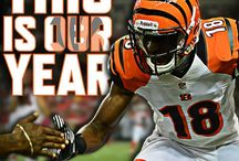 Welcome to the Jungle! BENGALS / by Local 12/WKRC-TV
