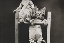 Cool Cats (and other animals) / Just cool pics of animals, mostly vintage photos / by Niko Okamoto