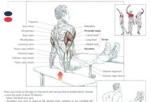 Tricep Exercises / by CTD Sports