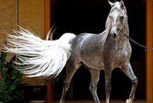 Animals-Horses #3 / by Ellary Branden