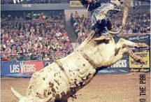 Bull Riders / by Lora Stickland