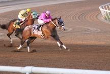 Appaloosa Racing / by Appaloosa Horse Club