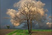 Nature/Weather / by Erinn Richert