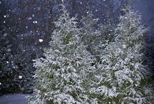 I love winter!! / by tammy alexander