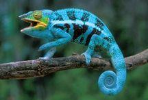 Reptiles, Amphibians, Tortoises / by Rebecca Alexander