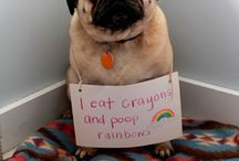 Pugs / by Kathleen O'Rourke