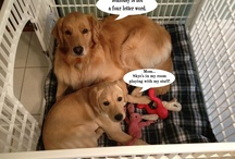 Doggie Dilemmas and Uh Ohs! / Dogs have dilemmas, too.  Silly dog situations that make me laugh. / by WelcomePup.com