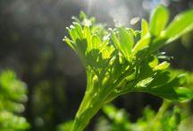 Green / by Taryn Wilson