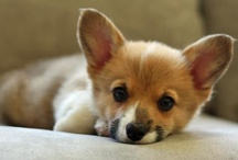 Pets I Want! / by Sammy Tenfelde
