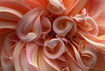 floral creations / by Saskia McAuley