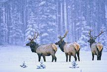 Winter's Wonderland / by Shawna Gray Schoonmaker