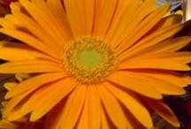 Flowers / by Emily DeCarlo-Pitek