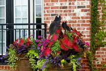 Container Gardening / by Kelly Harrison