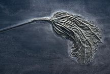 Fossil / by Bonnie Koenig