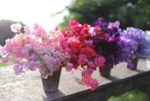 Seasonal Flower Alliance / by Floret Flower Farm