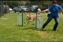 Dog Training / by spca LA