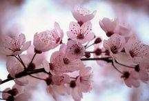 Sakura / by sakura