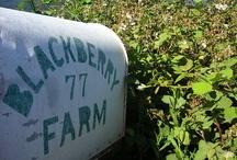 blackberry farm. / by cindylitwin