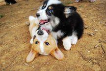 Big Tex and sibling! / by Lydia Jenson
